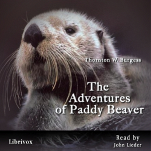 Adventures of Paddy Beaver, The by Burgess, Thornton W.