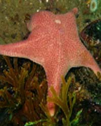 Diversity in the Nearshore The NaGISA Co... by Public Library of Science