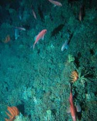 Marine Life on Seamounts – The CenSeam C... by Public Library of Science