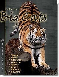 Big Cats by Beesley, Angela